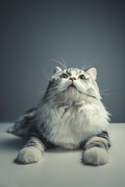 cat-1897221_960_720